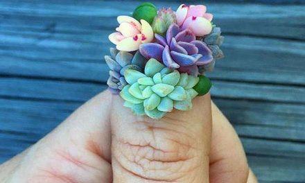 Lo último en uñas: Succulent nails